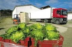 Photo camion et caisses de salades.